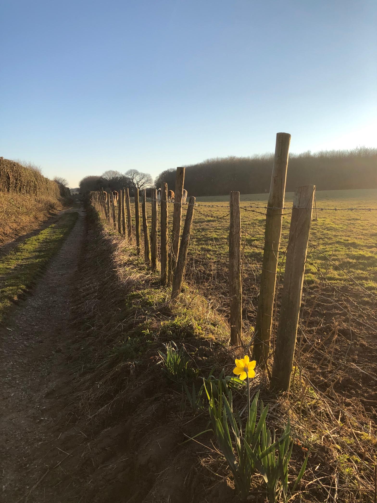 Footpath in Canterbury Kent