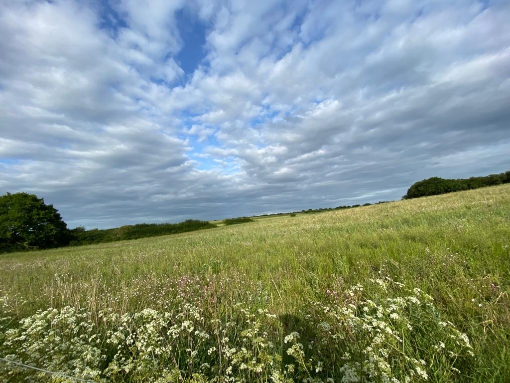 Wild flower meadow in Canterbury Kent